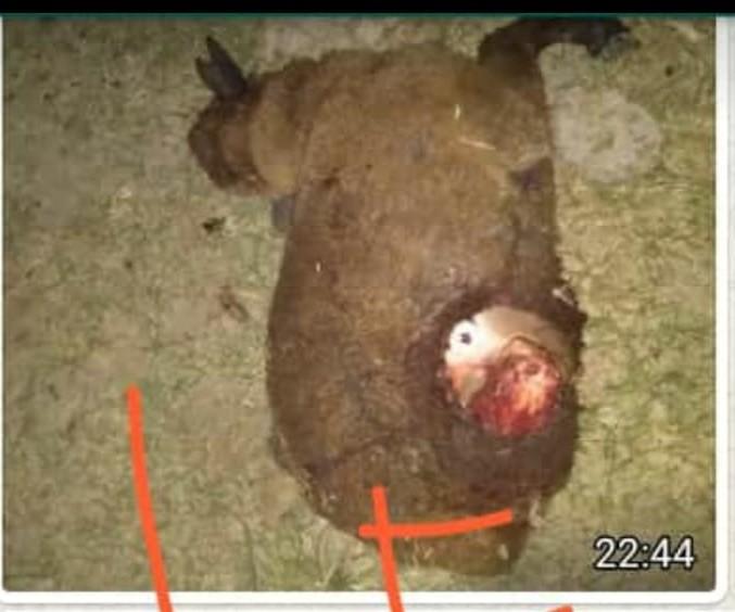 VECINOS DE VILLA BERTHET, PREOCUPADOS POR LOS EXTRAÑOS ATAQUES A LOS ANIMALES