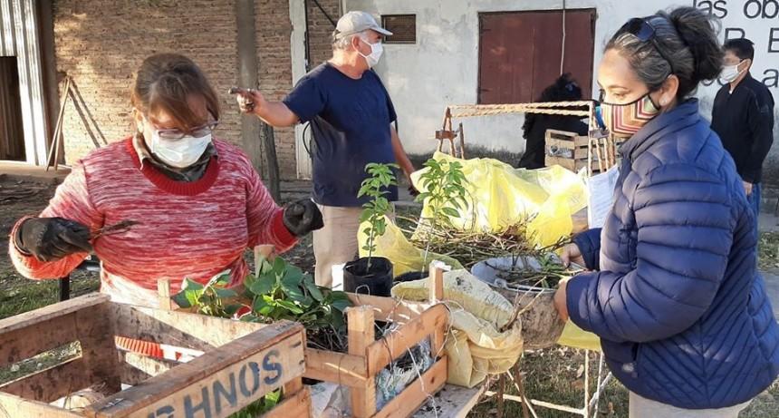 LA AGENCIA DE DESARROLLO LOCAL ENTREGA PLANTINES DE HORTALIZAS Y VERDURAS GRATIS