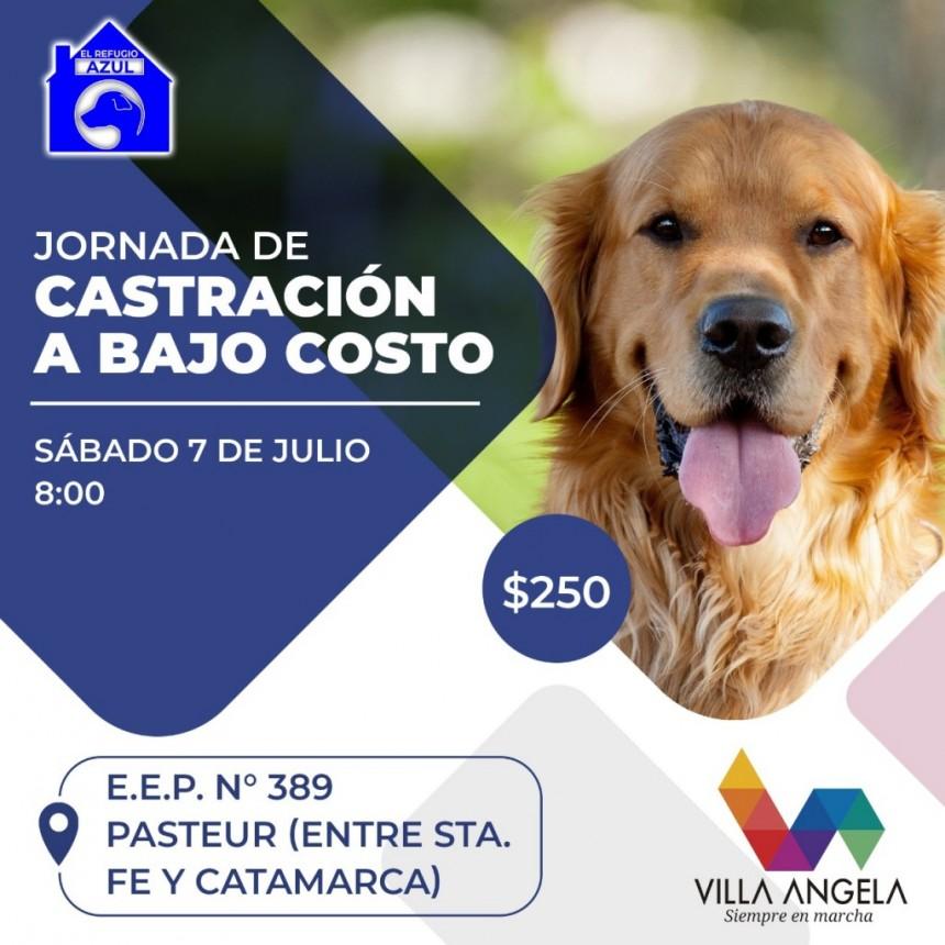 ESTE SABADO 4 DE JULIO SE REALIZARA UNA JORNADA DE CASTRACIÓN A BAJO COSTO