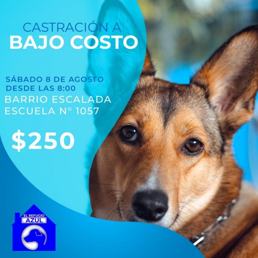 EL MUNICIPIO ACOMPAÑA NUEVA JORNADA DE CASTRACIÓN A BAJO COSTO