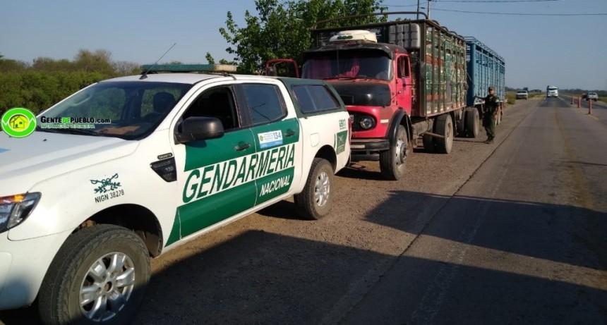 GENDARMERÍA Y POLICÍA DETUVIERON A UN TRANSPORTE DE ANIMALES QUE NO POSEÍA DOCUMENTACIÓN ALGUNA