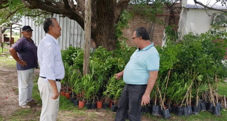 LLEGARON 700 PLANTAS MÁS PARA SEGUIR FORESTANDO LAS AVENIDAS DE VILLA ÁNGELA