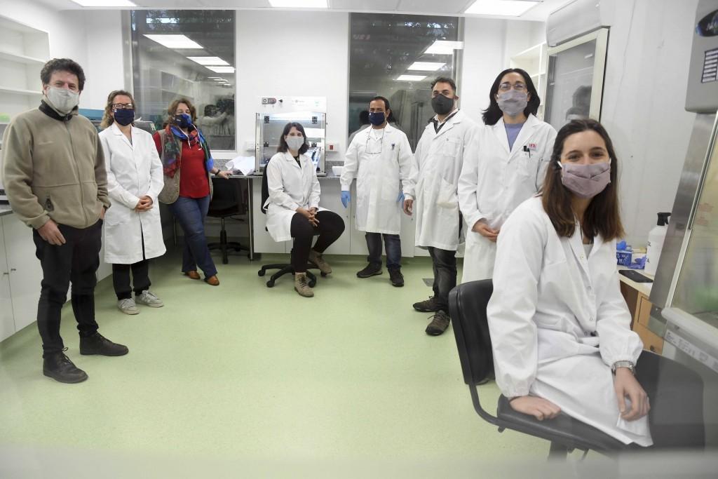 NEUTRALIZARON EL VIRUS DE LA COVID-19 CON SUERO DE LLAMAS